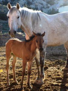 foals_dsc_0065-ca