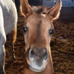 foals_dsc_0066-ca