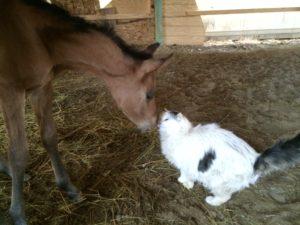 foals_img_0031_girlyfluffy