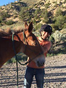 horses-mule_img_1692_bamba