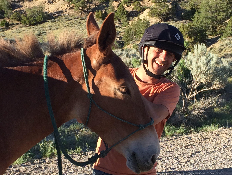 Horses-mule_IMG_1692_Bamba-e1478295357271
