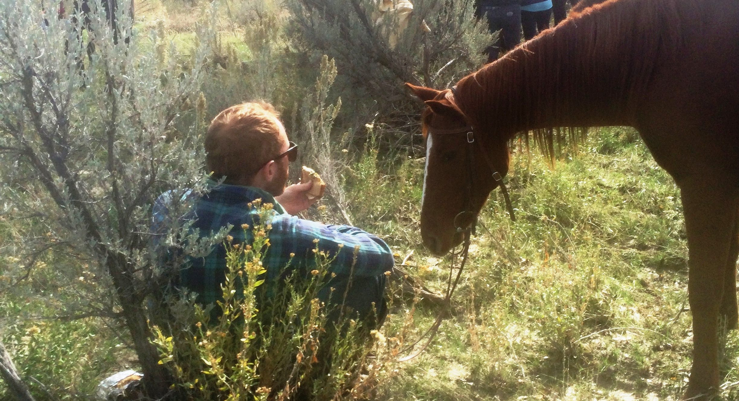 Horses_IMG_4443_HugoFrecka-ca-e1478298900993