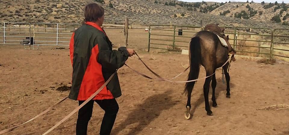 Horse_Sage-longlinesdriving-revslider