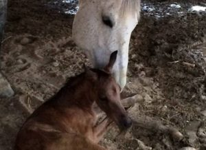 Horses_Helena&Girly-2-revslider