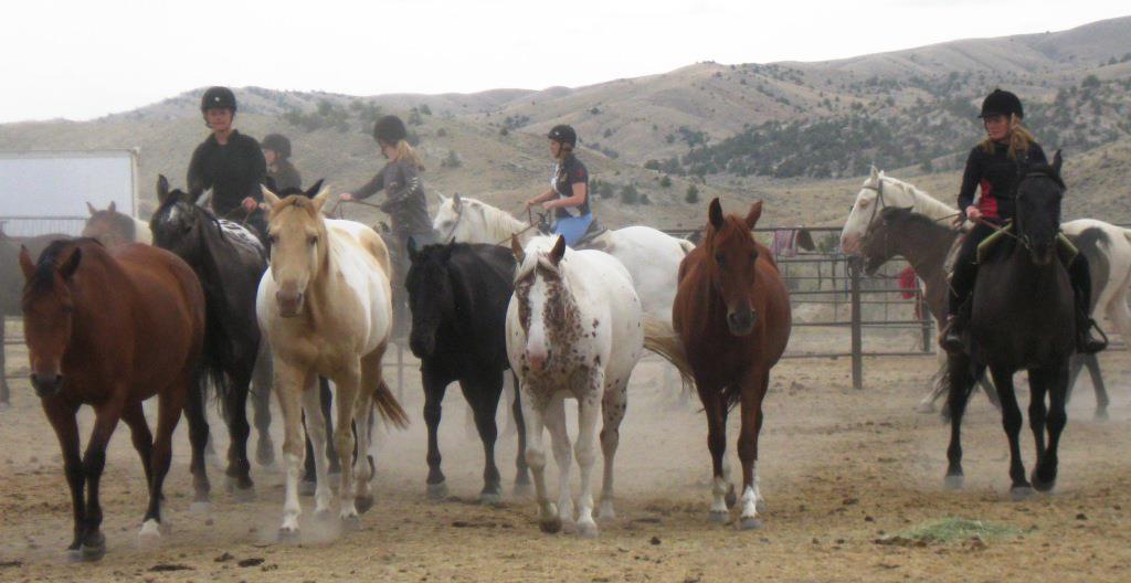 Horses_WranglingCorral-Tina