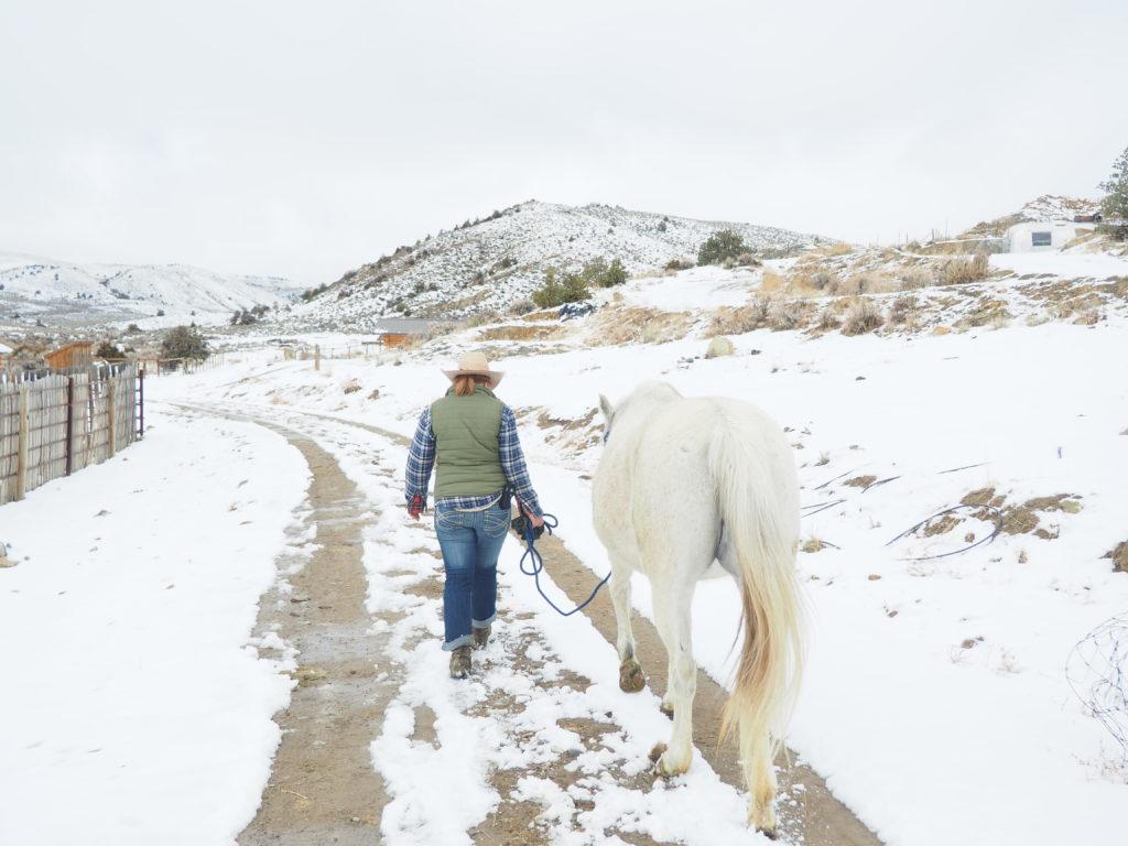 Equine Photography Wyoming