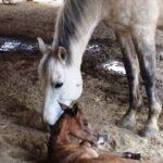 Horses_Girley-8